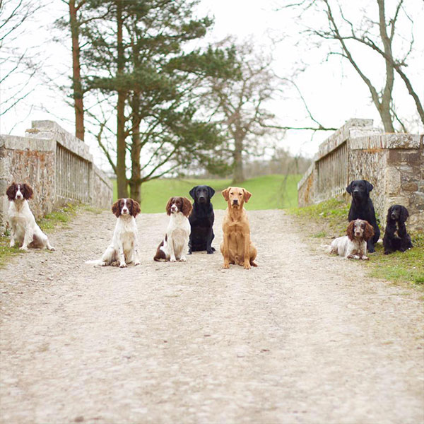 Sealpin Gun Dogs on Riddell Estate bridge